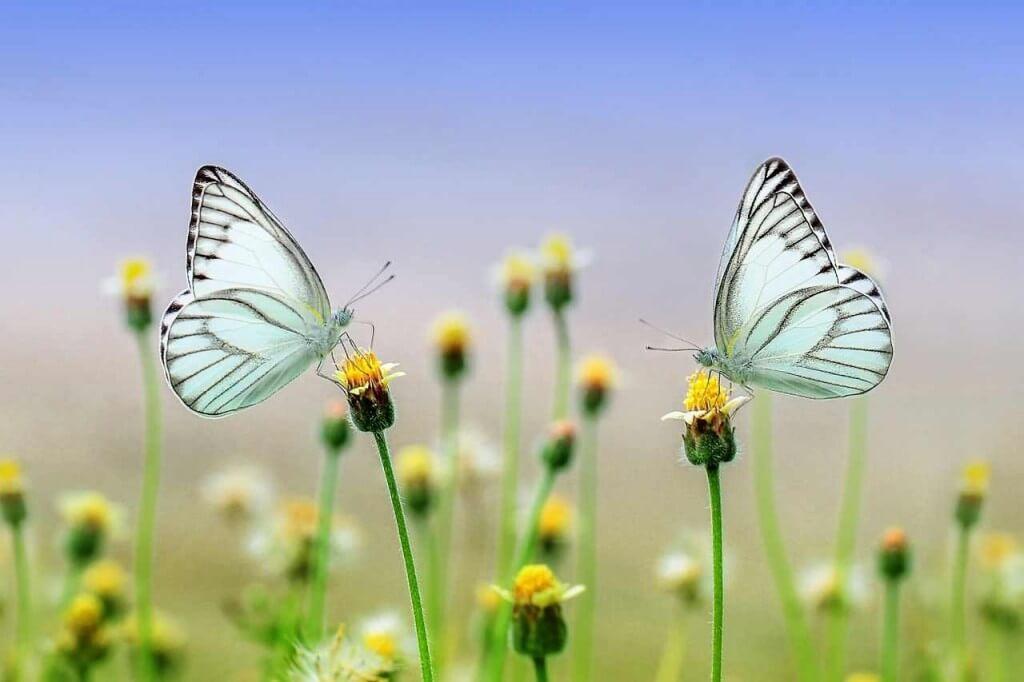 protger el medio ambiente. estudiar ingles en medellin